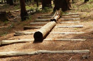 Cross-Log Chute, Nelder Grove of Giant Sequoias