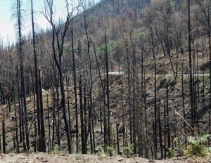 Railroad Fire:  1 year later