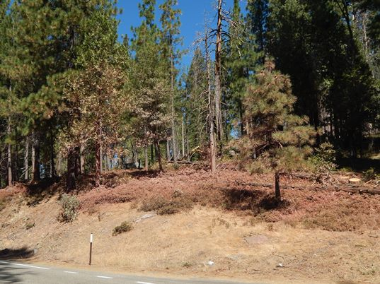Ferguson Fire:  Retardant along Wawona Road