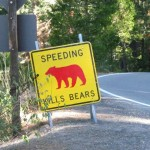 Speeding Kills Bears
