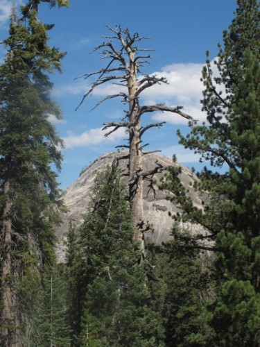 Sentinel Dome through the tree